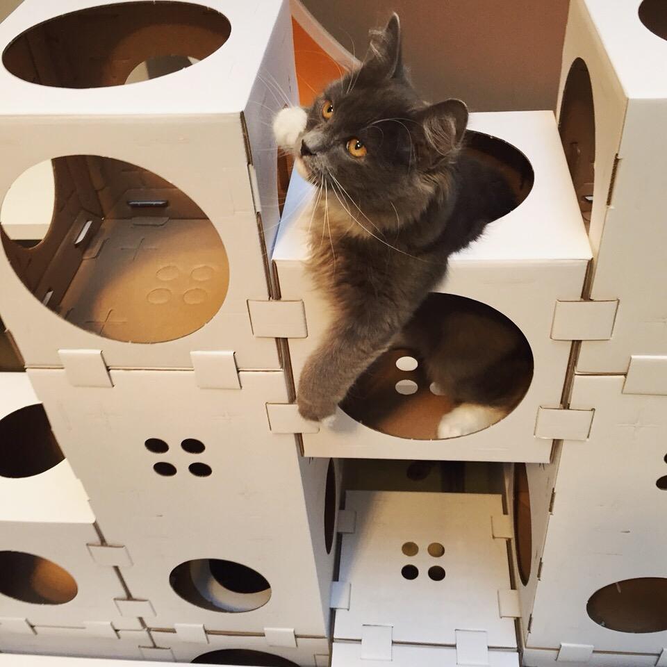 aristide h tel pour f lins urbains pension pour chats au coeur de paris. Black Bedroom Furniture Sets. Home Design Ideas